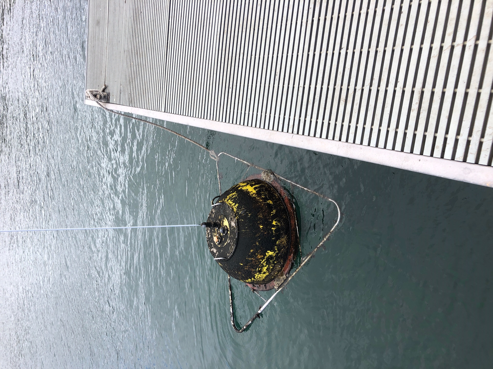 Recovered buoy with a lot of growth