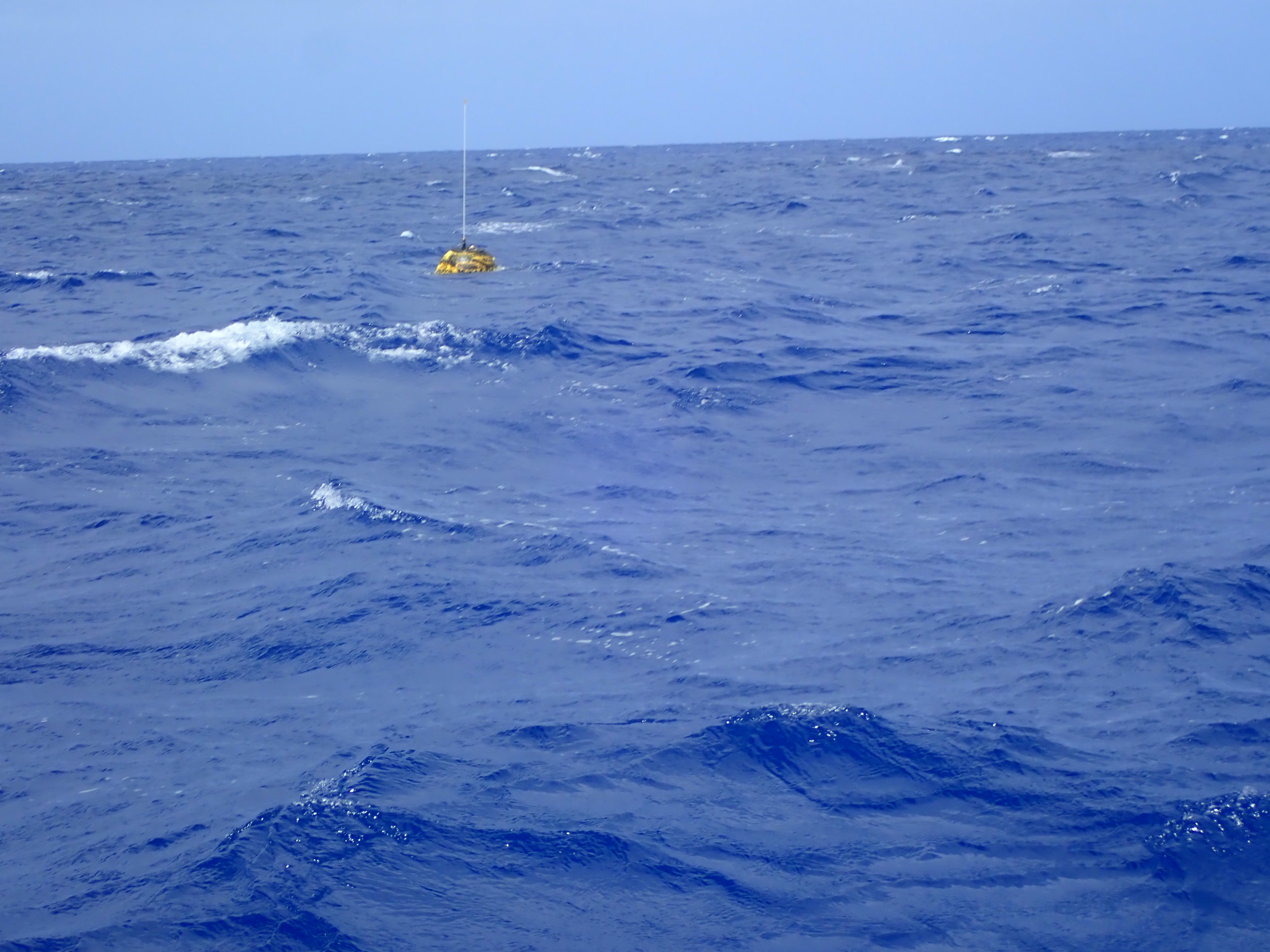 Drifting buoy in their sites